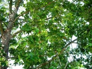 Paisagem Natural/Árvore , fonte de vida e de alegria