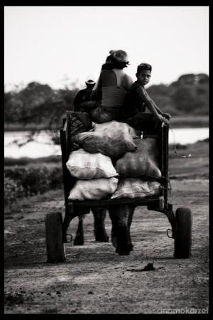 Gentes e Locais/De volta aos campos do Marajó