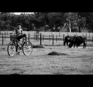 Gentes e Locais/Nos campos do Marajó