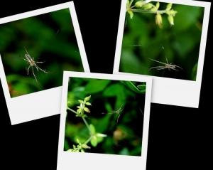 Outros/Spider on polaroid...