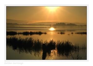 /Golden mornings