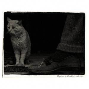/... gato protector ...