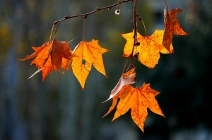 Outros/outono ...