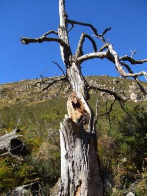 Outros/As árvores morrem de pé