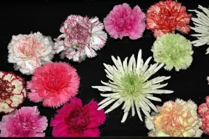 Outros/flores para ti...
