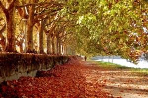 Paisagem Natural/Folhas caídas, almas  errantes...