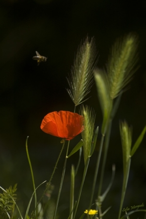 Paisagem Natural/De flor em flor