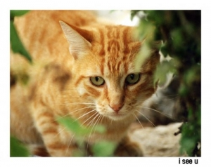 /Kitty