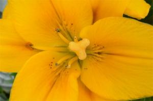 Outros/Somente uma flor 1