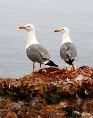 /História alegre de uma gaivota triste#3