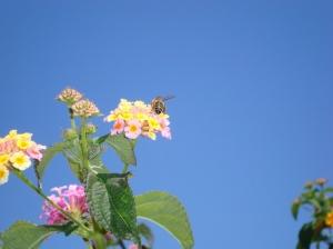 /o CU da abelha...