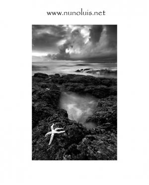 Paisagem Natural/Estrela do Mar