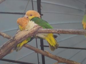 Animais/O amor