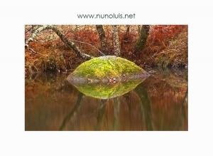 Paisagem Natural/Monstro do rio