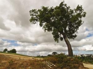 Paisagem Natural/Uma árvore. Só.
