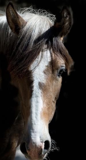 /equus
