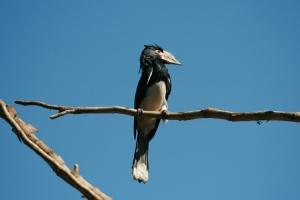 Animais/Bird!!!