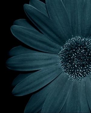 /Blue
