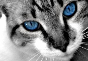 Animais/that eyes...XD