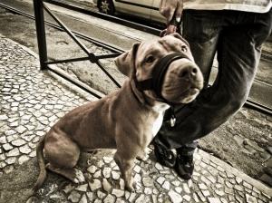 Animais/Preso por ter cão