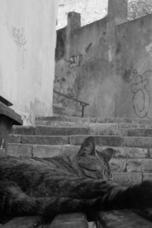 Paisagem Urbana/O descanso do guerreiro
