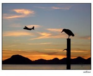 Paisagem Natural/Pássaros madrugadores