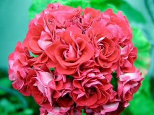/Flor...