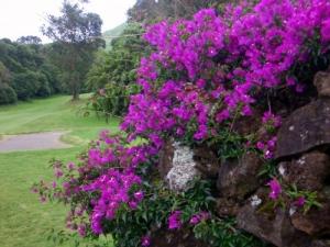 /flores no GOLFE DA BATALHA