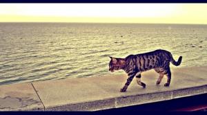 Animais/A beleza do mar...ate os gatinhos apreciam...