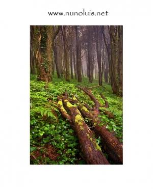 Outros/Árvores no nevoeiro