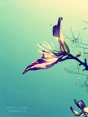 Outros/Flor.