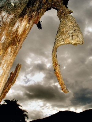 Paisagem Natural/A casca da árvore