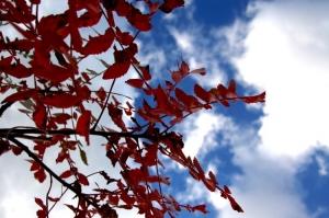 Macro/Sinais de outono