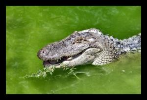 /Croc4