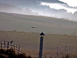 Outros/Falcões na névoa