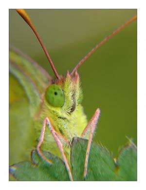 Macro/Green Eyes II
