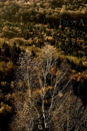 Paisagem Natural/retrato de uma árvore