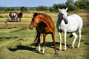 """Animais/""""Cavalos à solta..."""""""