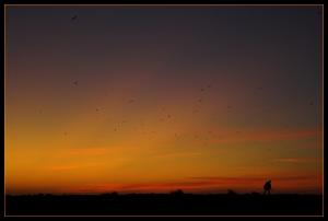Gentes e Locais/O Domador de Pássaros...