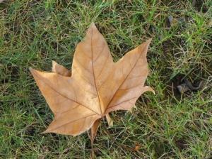 Outros/Autumn leaf