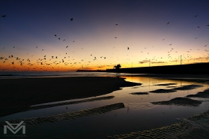 /Many seagulls in the sky