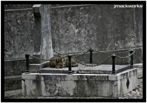 Animais/descanso