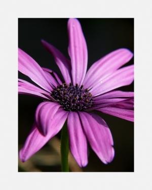 Outros/Flower