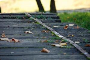 Gentes e Locais/Folhas soltas em velho caminho...