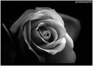 Macro/rosa 1
