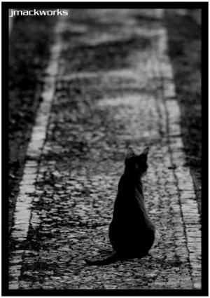 Animais/the path