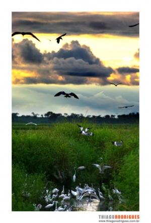 Paisagem Natural/Pantanal