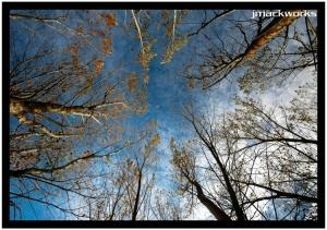Paisagem Natural/reach for the sky