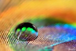 /...magic drop...