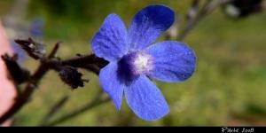 Paisagem Natural/Teus Azuis